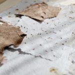 Warsztaty wytwarzania papieru czerpanego - ArtZagroda